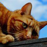 catb 3
